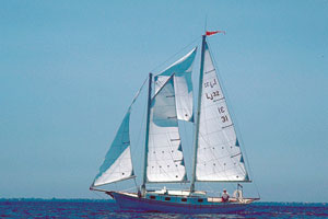 Don sailing Delphinus